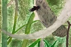 Kai-Williams-Watercolour-Grade-9-CDS