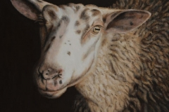 DGreenstein-720-Sheep-IV