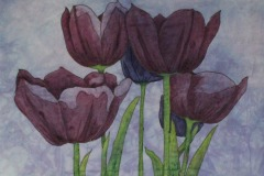 KRodgers-2019-Purple-Tulips