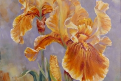 MBroome_2021-Yellow-Irises